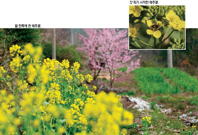 달달 아삭 노란색의 유혹