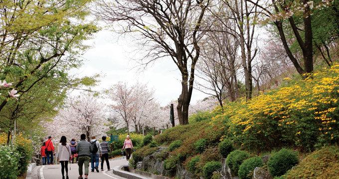 봄꽃 흐드러진 낙산에서 만나는 서울의 미소
