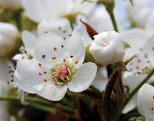 열매를 위한 희생 그래서 더 아름답다
