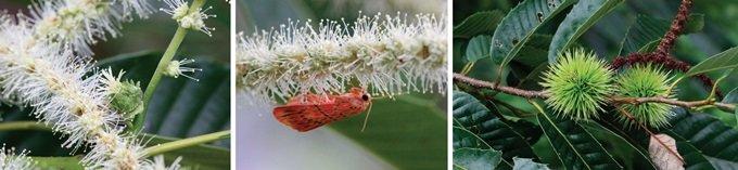 무수한 수꽃들의 지극한 사랑