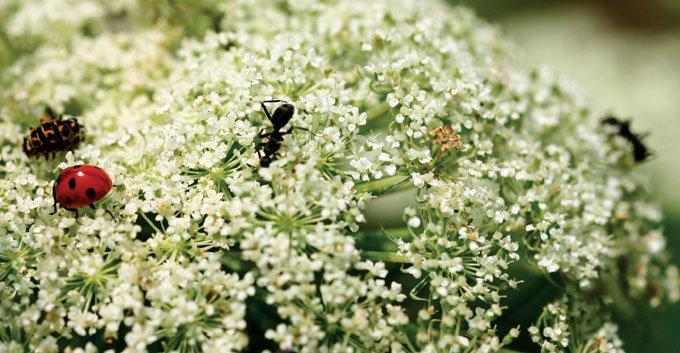 한 송이 꽃을 피우기 위해…