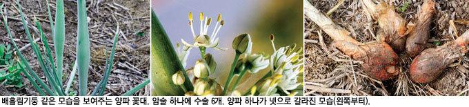 미끈한 배흘림 꽃대 한눈팔지 않는 소박함