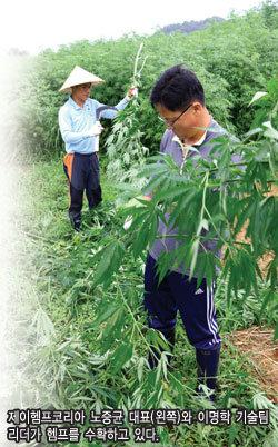 대마산업 합법화가 농업의 미래인 이유