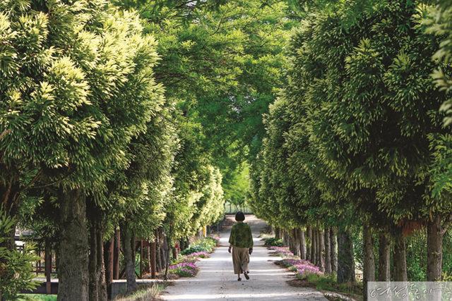 초록의 향연에 시름은 사라지고 청산수목원