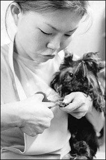 애완동물 미용사