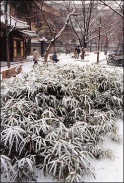 흰 눈 내리는 날 부부·연인이 함께 걷기 좋은 산책로 베스트 8
