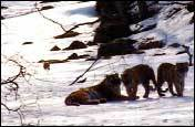 2년간 시베리아 호랑이 카메라에 담은 EBS 박수용 PD 촬영 뒷얘기