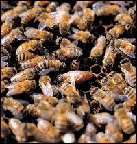 달콤한 천연 피로회복제 꿀