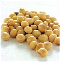 골다공증 예방하는 단백질 식품 콩