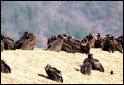 겨울방학에 가볼 만한 자연생태 체험장 & 캠프 총정보