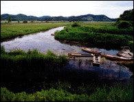 짙은 안개와 한 무리 철새 떼가 손짓하는 곳~ 겨울 호수 7