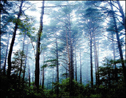 요즘 최고 인기! 테마별로 찾아가는 전국 자연휴양림 14