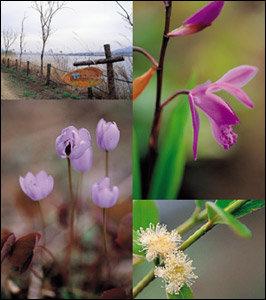 한나절 가족나들이 코스로 좋은 양평 들꽃 수목원들
