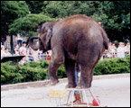 동물의 생태를 직접 관찰할 수 있는 동물원 & 수족관 나들이
