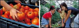 '몸짱' 아줌마 정다연 가족의 토마토 농장 체험