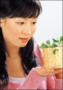 새싹채소 종류와 효능
