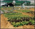 서울 근교 유기농 주말농장