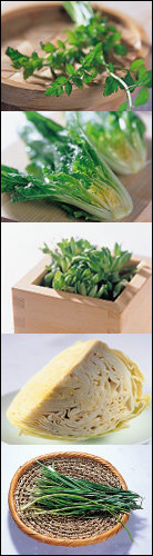 초여름 김치 & 겉절이 맛내기 노하우
