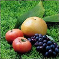 과일별 항암효과 섭취방법