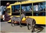 아프리카 박물관 & 사파리 체험