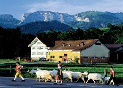 퐁듀와 요들, 스키어들의 천국 스위스