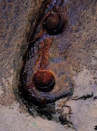 강원 인제·양양·속초·고성