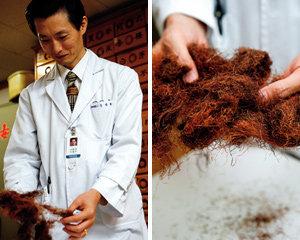 '옥수수수염으로 건강 지키기'