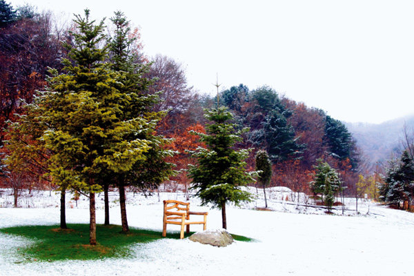 크리스마스 분위기 물씬~ 평강식물원