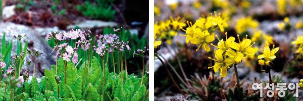화사한 봄꽃도 구경하며 생태체험 즐겨요~ 평강식물원