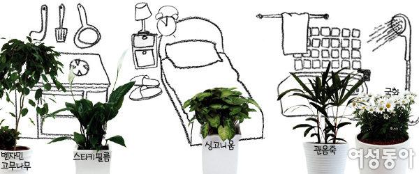 공간별 찰떡궁합 공기정화 식물