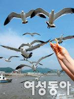 강화 석모도 보문사와 민머루 해변 외