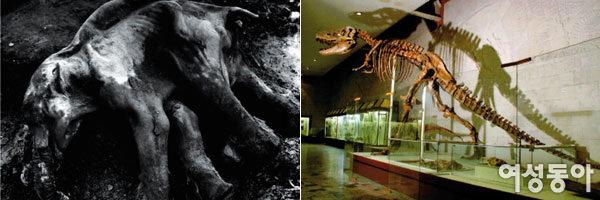 러시아자연사박물관展