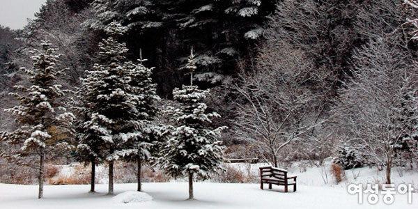 나무 위에 피어난 눈꽃 구경하고 신나는 민속놀이 즐겨요~ 평강식물원