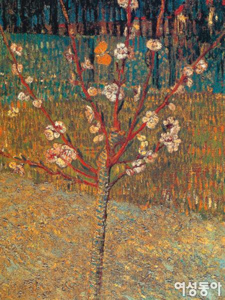 꽃이 핀 복숭아나무