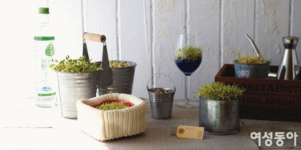 집에서 직접 길러 먹는 무공해 새싹채소