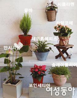 한겨울에도       싱그러운 초록식물                     즐기는 법