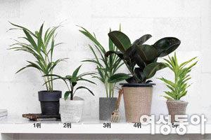 NASA 발표 공기 정화 식물 베스트 10