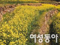 전국 봄꽃 나들이 명소