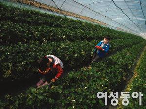 봄이 오는 소리 들으러 딸기 농장으로 GoGo!!