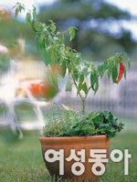 우리집표 유기농 채소 8