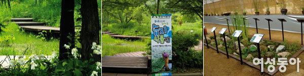 알록달록 야생화 축제가 한창~ 평강식물원