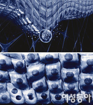 주름을 지배하는 묘약 줄기세포 코스메틱