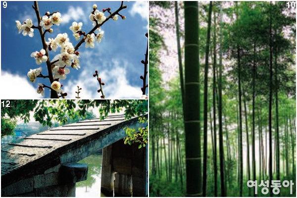 꽃 향기 가득한 도시 상하이에서 봄을 맞다
