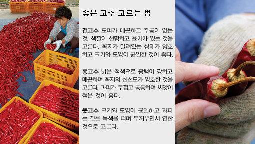 경북 영양 고추 농장 체험
