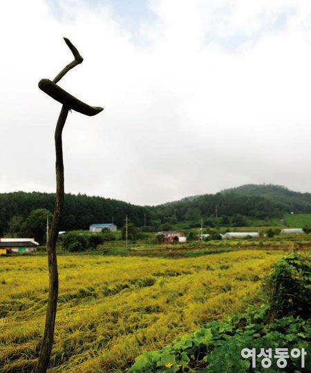유기농 쌀농장 체험 여행
