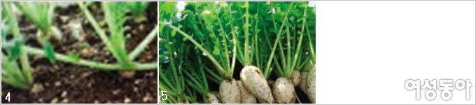 베란다에서 김장 채소 키우기