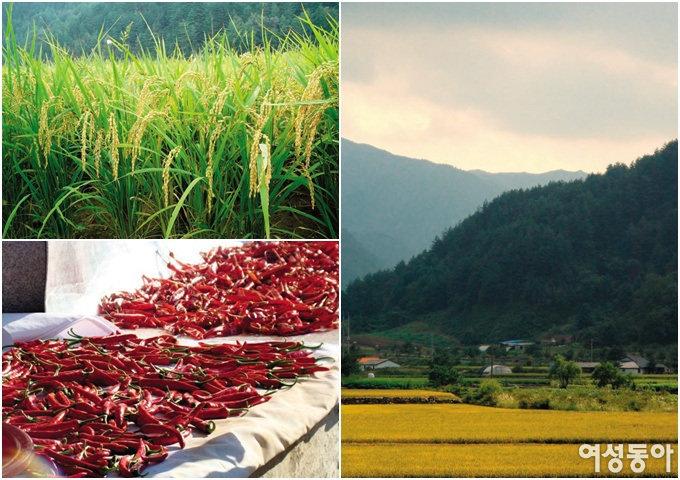 시골 생활의 백미, 가을 추수