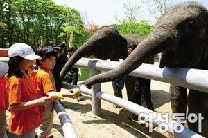 스리랑카 아기 코끼리들의 여덟 살 생일잔치와 아름다운 인연