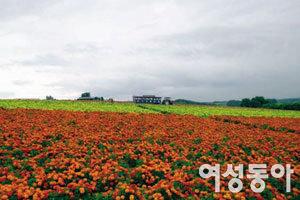 꽃의 도시 후라노에서 보낸 최고의 여름