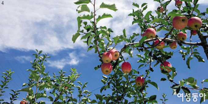 사과 익어가는 마을